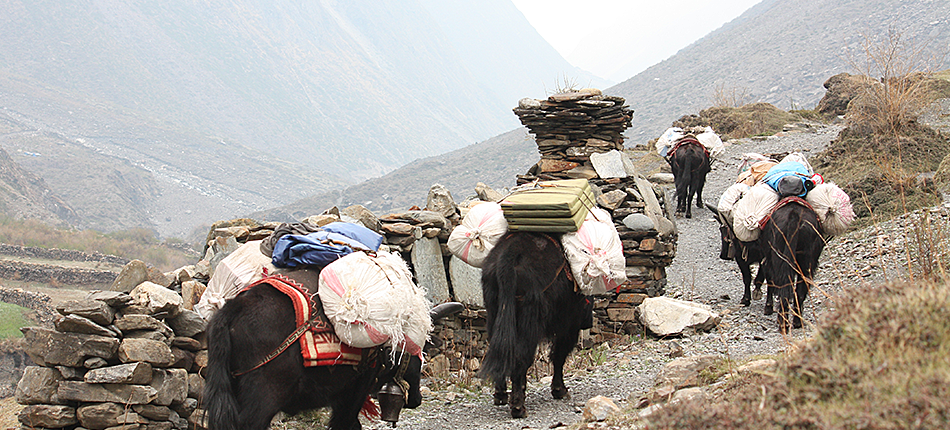 Tsum Valley - Carrying Luggage by Donkey